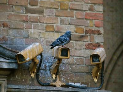 photo of a pigeon sitting on a cctv camera