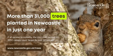 A squirrel eating a nut. Text: More than 31,000 trees planted in Newcastle in just one year.