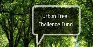 Urban Tree Challenge Fund